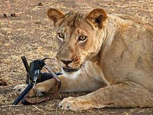 Ο επιζών – Ντοκιμαντέρ με ζώα