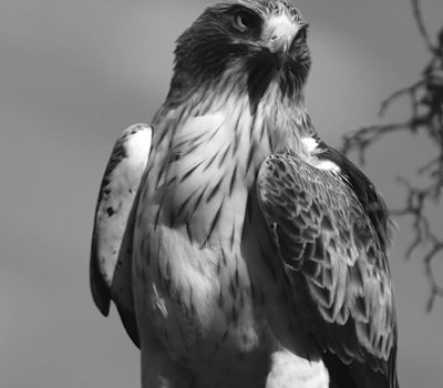 Αετός – ο βασιλιάς του ουρανού