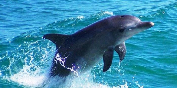 Τα δελφίνια